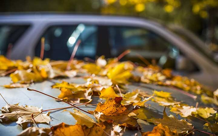 Don't Let the Fall Leaves Ruin Your Paint! Here's How You Can Protect Your Car